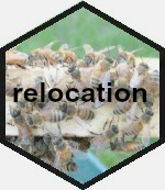 hex bees 150 words
