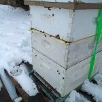 bee hive in winter